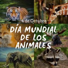 ¿Por qué el 4 de octubre se celebra el Día Mundial de los Animales?