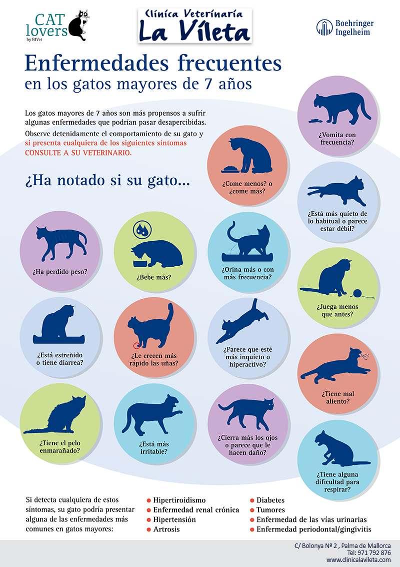 veterinarios de gatos en mallorca