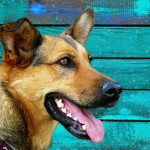 higiene dental perros palma