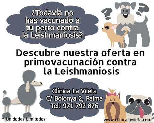 ofertas-vacuna-leishmaniosis
