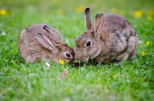 veterinarios de conejos en palma