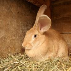 Los Conejos Cuidados y Alimentación