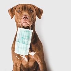 Recomendaciones de la D.G. de derechos de los animales durante el estado de alarma