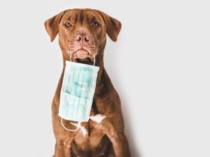 Covid-19 recomendaciones para mascotas