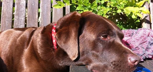 Golpe de calor en perros y gatos: síntomas y como actuar