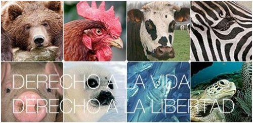 Declaracion de los derechos del animal