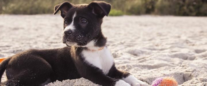 Playas para ir con perros en Mallorca